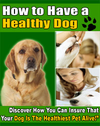 healthy dog cover