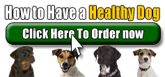 Buy How to Have a Healthy Dog
